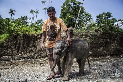 gajah reza