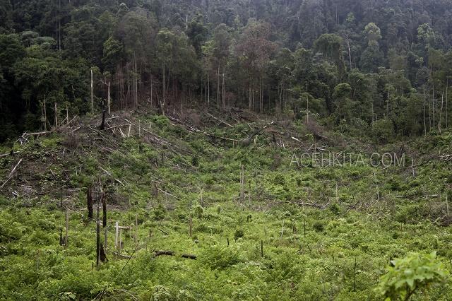 Hutan_3